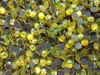 hot fix DMC MC crystal rhinestone citrine AB
