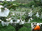 Anti-UV PP Nonwoven Fabric for Fruit Cover