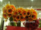 Fresh Cut Flowers--Gerbera--Daniel