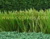 CCG synthetic turf Fine
