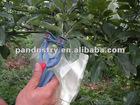 Fruit bagging device