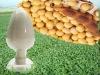 Non-GMO Isolated Soybean Protein Powder