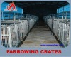 New type galvanized pipe sow farrowing crates