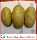 "JQ ""China Fresh Potato"" Fresh Potato Price / Chinese fresh potato seed importers"