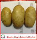 "JQ ""China Fresh Potato"" Fresh Potato Price / Chinese fresh potato seed importers"