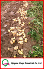 "JQ ""China Fresh Potato"" Fresh Potato Price / 2012 Crop Potato/fresh sweet potatoes/new potatoes"