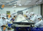Aquatic Production Dividing Sorting Conveyor