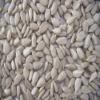 bakery grade sunflower kernel