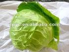 Chinese fresh Beijing cabbage