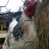 chicken wire,hexagonal wire mesh