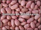 Chinese Qrganic Peanut Kernels 2012