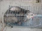 Possum Cage Trap(foldable,el-galvanized,portable)