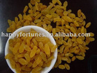 golden raisins sultana raisins golden grape seedless raisins snack fruit dried fruit