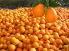 competitive chinese orange fresh fruit