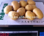 2012 NEW FRESH holland POTATO