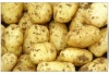 New crop potato