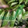Olive leaf P.E.Hydroxytyrosol2.5%, 10%, 20% GMP