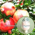 Natural Pomegranate Juice Powder/Punica granatum Linn (GSI26A001)