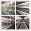 high quality poultry battery cage