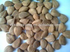 supply sweet apricot kernels