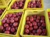 Fresh Huaniu Apple( 2010 crop )