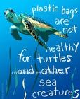 Advertising printing plastic posters