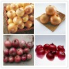chinese red onion/yellow onion