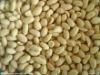 24/28 blanched peanut kernel