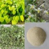 Plant Extract (Herbal Extract)