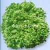 Sheng Yang Da Su Sheng lettuce seed