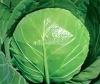 hybrid cabbage seeds