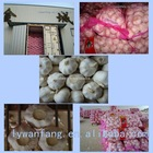 2012 Chinese fresh garlic hot sale