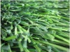 Soccer Grass (MD 400 SERIES)