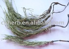 horsetail grass and powder extract