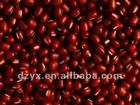 Dried small red bean adzuki bean of China