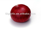 export fresh red onion