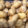 China vegetable Fresh good quality potato
