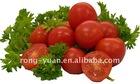 tomato paste in drum
