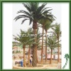 Artificial canary Palm Tree(4m)