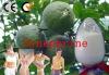 Citrus Aurantium Extract Synephrine 5%~98%(CAS No.94-07-5)