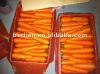 Wholesale 2012 new crop organic polish fresh carrots