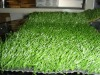 Artificial lawn /artificial grass/soccer field artificial grass soft suit for sports ground,