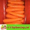 2012 Crop Fresh Carrot