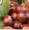 DY-00 chestnut roaster