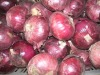 2011 fresh red onion