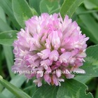Biochanin A 99%; Red Clover Extract Biochanin A 99%; CAS 491-80-5; EINECS 207-744-7