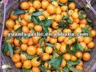 fresh honey mandarin orange