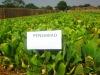 biological agriculture fertilizer