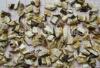 Freeze Dried Shiitake