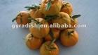 Sales in Southeast Asia fresh orange Mandarin